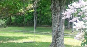 swing in tree