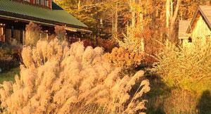 feat-autumn