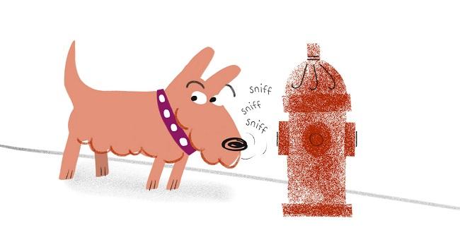 Anna Raff dog